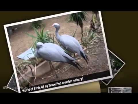World of Birds – Cape Town, Western Cape, South Africa