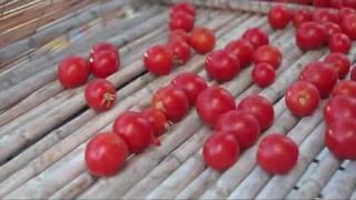 Manu Chao - Minha Galera (Official Videoclip)