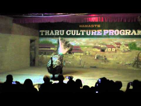 Tharu Culture Dance (part 4 – chicken dance)