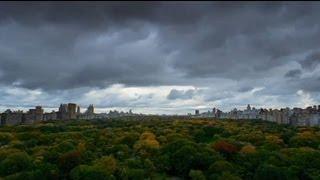 """euronews cinema - """"The Central Park Five"""", un documentario per la verità"""