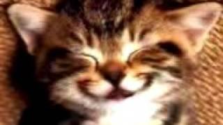 El Gato despertador