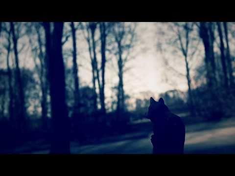 Fredrik - Flora (full album stream)
