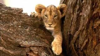 the lion sleeps tonight - tradução