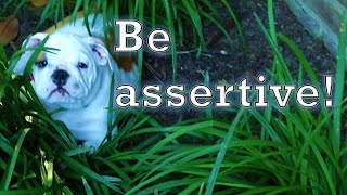 Hypnotic Conditioning: Be Assertive!