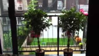 BEAUTIFUL MOMENT: Talking Plants