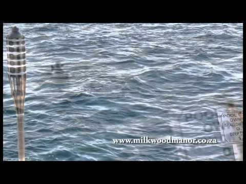 Seal at Milkwood Manor.mp4