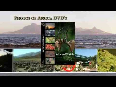 Photos of Africa DVD's – Africa Wildlife DVD's