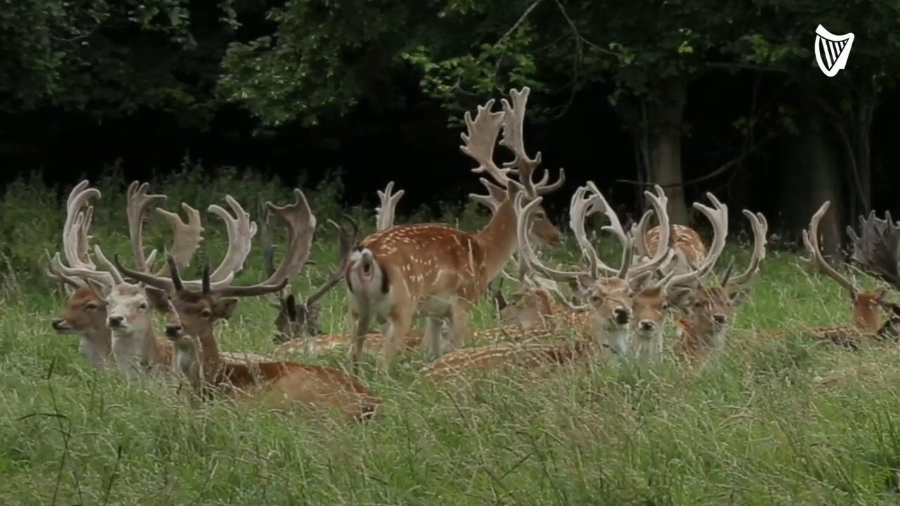 Protecting Deer of the Phoenix Park – Why 'an Apple or Carrot' can cause Serious harm to the anim…