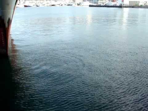 Seal in Waterfront 2 – Cape Town – South Africa