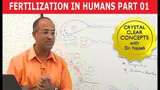 Fertilization in Humans 1/8 width=
