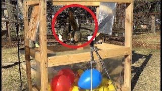 Razor Sharp Claws Popping 36 Emoji Balls and Balloons - Squirrels