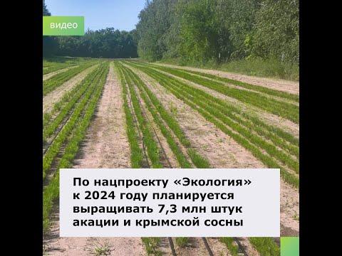 О выращивании посадматериала для донских лесов