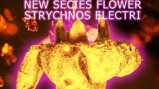 NEW Species FLOWER - Strychnos Electri