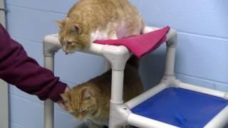 Adoptable Pet of the Week - Jake & Ginger