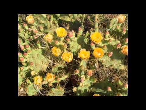 The Lonely Desert: Part 2 (Medium).m4v