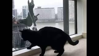 el gato vs. el limpia vidrios
