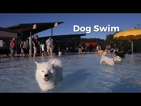 Local pet shop Friendly Paws hosted their annual dog swim to raise money for the Athens Humane Society on Sept. 19.  Read the full story here: https://www.thepostathens.com/article/2019/09/dogs-day-off-swim-athens-city-pool  Video by Nate Swanson Editing by Nicholas Langer  Visit our website: https://www.thepostathens.com/ Find us on social media: Instagram: https://www.instagram.com/thepostathens/ Twitter: https://twitter.com/ThePost Facebook: https://www.facebook.com/ThePostAthens
