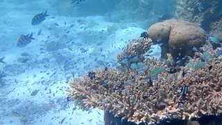 MALDIVES海底LIVE SHOW.MOV