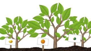 Fusión I.Q. 13 Injertos en las plantas.