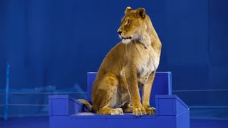 Innovation Nation - Greenscreen Animals