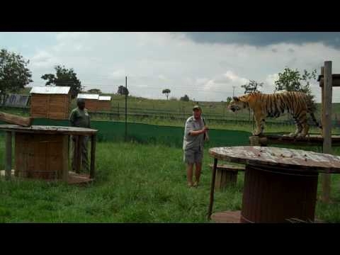 Fun with Tigers Part 1