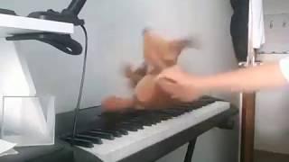 Sizzles Tocando Monlight Sonata