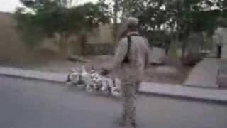 Hilarious Video - Drill sergeant in Iraq drilling ducks and geese