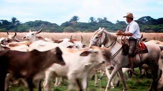 "JAVIER MARTINEZ ""GUAYABO AMIGO"" VIDEO OFICIAL"