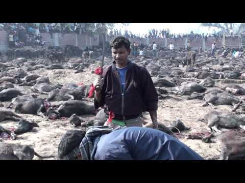 Gadhimai Festival – Nothing Worse Than A Dull Blade (www.travelyourassoff.com)