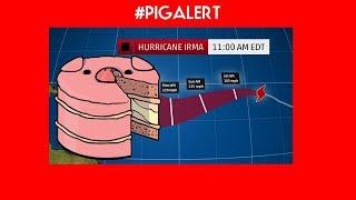 #PIGALERT HURRICANE UPDATE