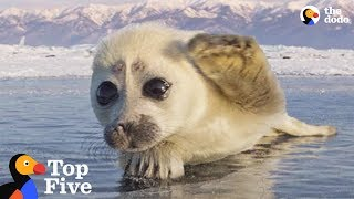 Seal Pup Waves To Photographer + Other Amazing Animal Encounters | The Dodo Top 5