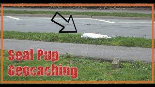 AMAZING Seal Pup Geocaching