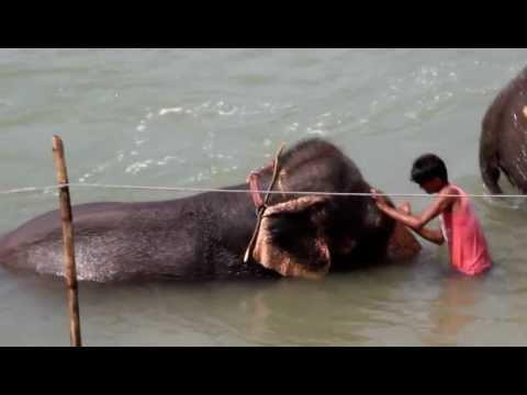 Nepal Chitwan 大象洗澡