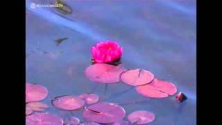 Relax with REIKI IMPRESSIONS - 04 UNITY (PURERELAX.TV)