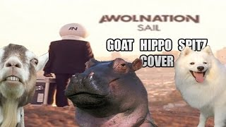 Awolnation - Sail (animal cover)