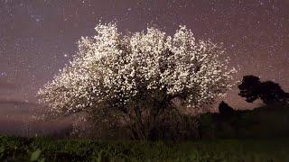 Fenômenos naturais e poderosos eventos climáticos meteorológicos Timelapse - Música Instrumental