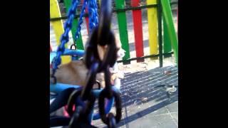 Куче се люлее на люлка!!!   :-)