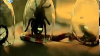 Галена - Пак Ли (Официално Видео) /// Galena - Pak Li (Official Video)