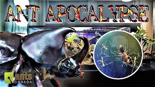 Ant Apocalypse Stopped by a Rhino Beetle width=