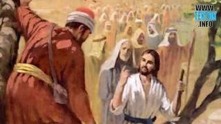 Evangelio de hoy: Domingo 30 de Octubre. Zaqueo se sube en un árbol para ver al Señor