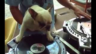 SCRATCHING TURNTABLISM DJ DOG ON VINYL TURNTABLE