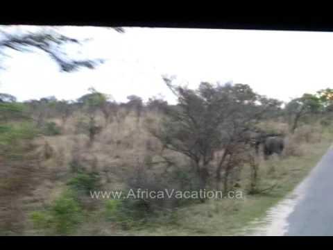 Herd of Elephants in Kreuger National Park