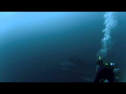 Dolphins show in south africa