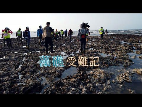藻礁受難記