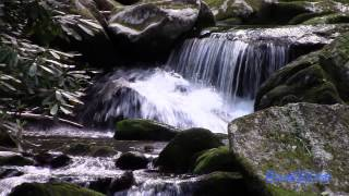 ASMR Relax to a Mountain Stream from Western North Carolina