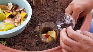 Como fazer composteira para qualquer planta rapidinho sem gastar nada! Faça adubo orgânico em casa.