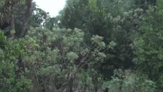 Gratidão, Chuva na roça, A fartura no campo, Sons da natureza, Relaxamento caipira,