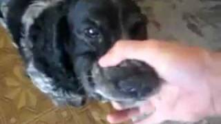"Hilarious Dog ""Bla, Bla, Bla"""