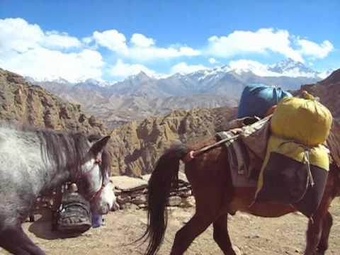 мулы в Мустанге ( Непал).m4v mules in Upper Mustang Nepal