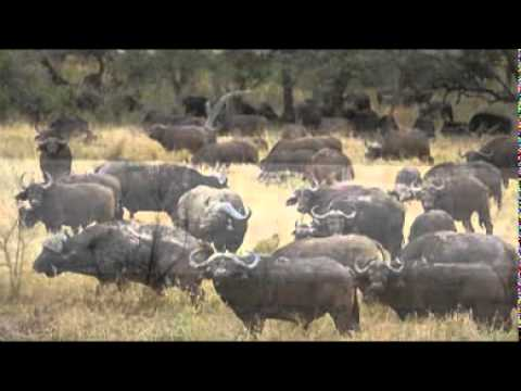 Ismangaliso Wetland Park – South Africa Travel Channel 24